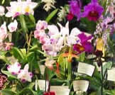 Ocean State Orchid Society